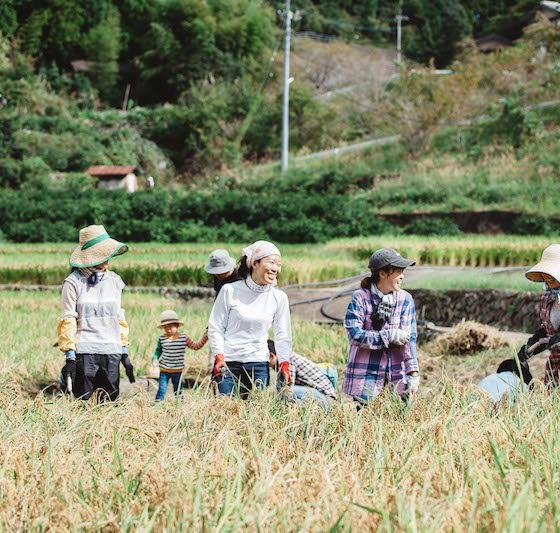 Food Hub Project <br/>つなぐ農園『さくつけ会議』(アルファ版)