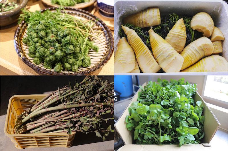 神山の山菜と新鮮なクレソン(左上:こごみ、右上:筍、わらび、右下:クレソン、左下:イタドリ)