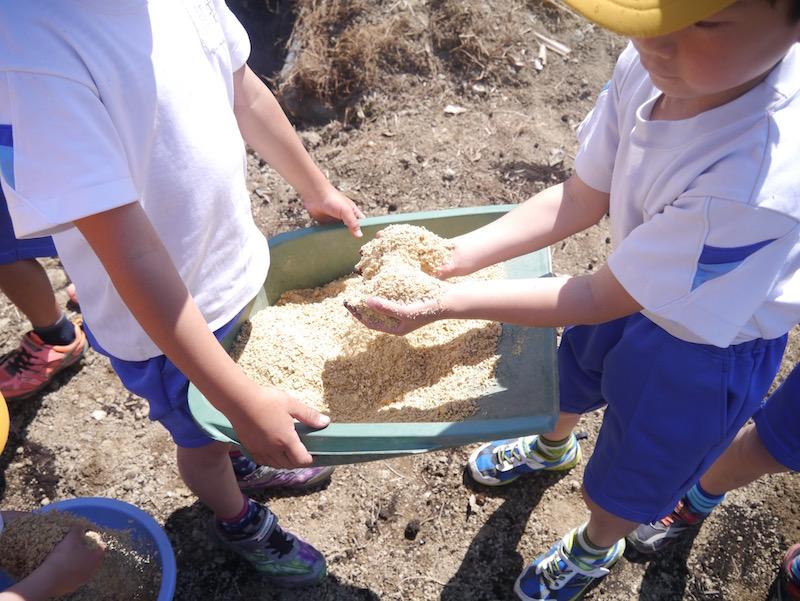昨年5年生が育てたもち米の糠から、肥料をつくっています。