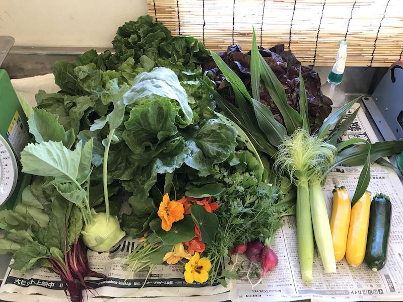 食べられる花も加わり野菜がカラフルになってきました!
