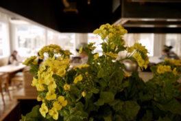 春は、毎日営業します!<br/>春の営業時間変更のお知らせ