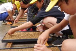 神山でつなぐ・つながる 5年生の「お米プロジェクト」②種まき