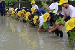 神山でつなぐ・つながる 5年生の「お米プロジェクト」④田植え