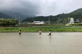 つなぐ農園奮闘記 2018年7月(渡邉) <br/> お米は日本酒に、麦はビールやパンになる。