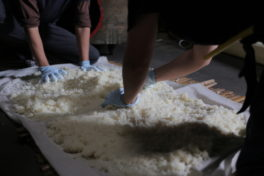 台風、イノシシ…<br/>「神山の味2018」のお米づくりはトラブルだらけ。