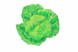 ちえちゃんの あんな野菜、こんな野菜<br/>「キャベツ」(2019年4月号)