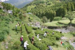 植田彰弘の写農人(しゃのうひと)<br/>「もっと身近にお茶を楽しむ場を」