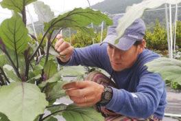 つなぐ農園奮闘記「最善の策を考えながら、栽培する」