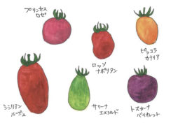ちえちゃんの あんな野菜、こんな野菜<br/>「ミニトマト」(2019年8月号)