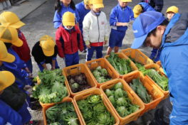 神領小学校1年生の野菜でランチ