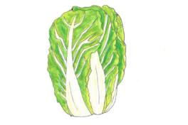 ちえちゃんの あんな野菜、こんな野菜<br/>「白菜」(2020年2月号)