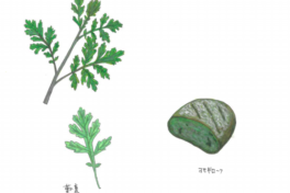 ちえちゃんの あんな野菜、こんな野菜<br/>「ヨモギ」(2020年4月号)