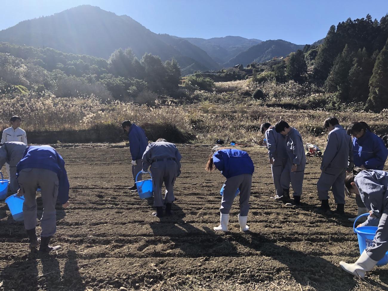 神山小麦の播種