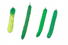 ちえちゃんの あんな野菜、こんな野菜<br/>「きゅうり」(2020年6月号)