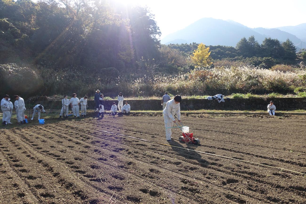 1年生による神山小麦の播種